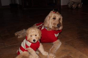 Beau's first Christmas